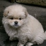 puppy china