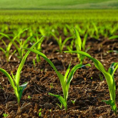 n-fix-crops-405x405